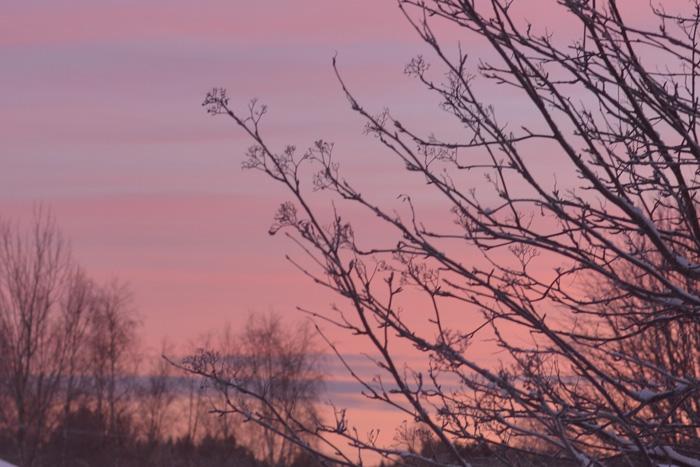 rosa himmel