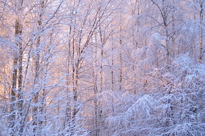 vinterkvist