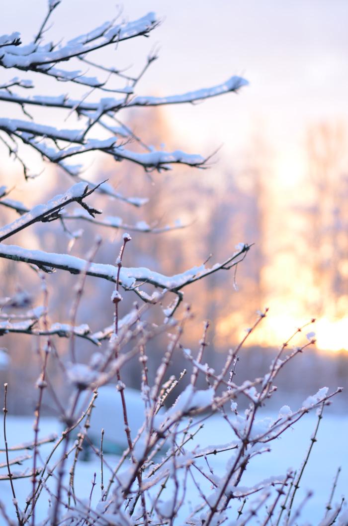 vinterkvistar