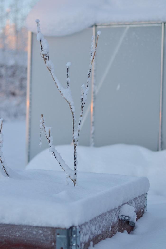 vintervilad