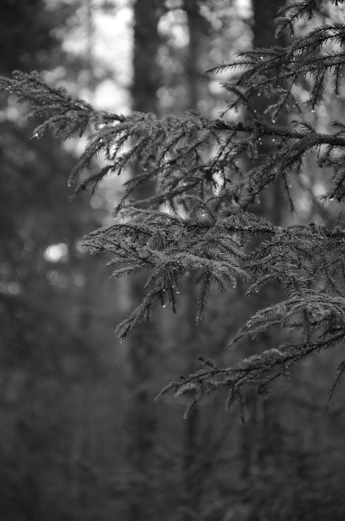 fota direkt i svartvitt