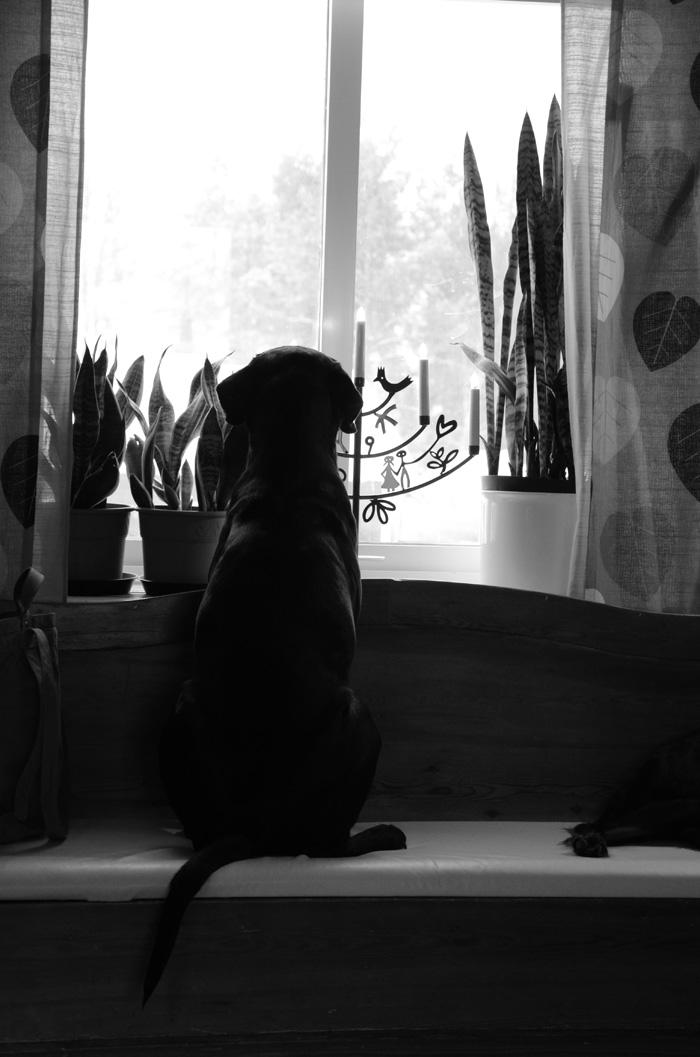 Hundbild blandras