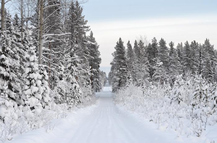 Skidtur skogsväg