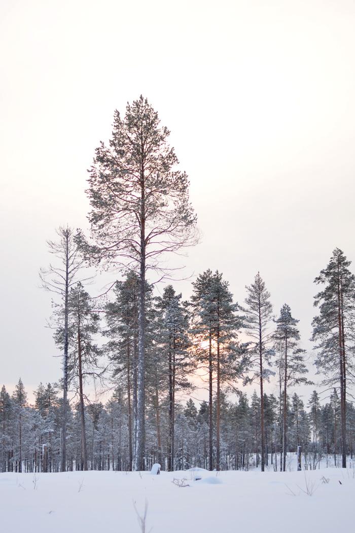 Skidtur vintersol