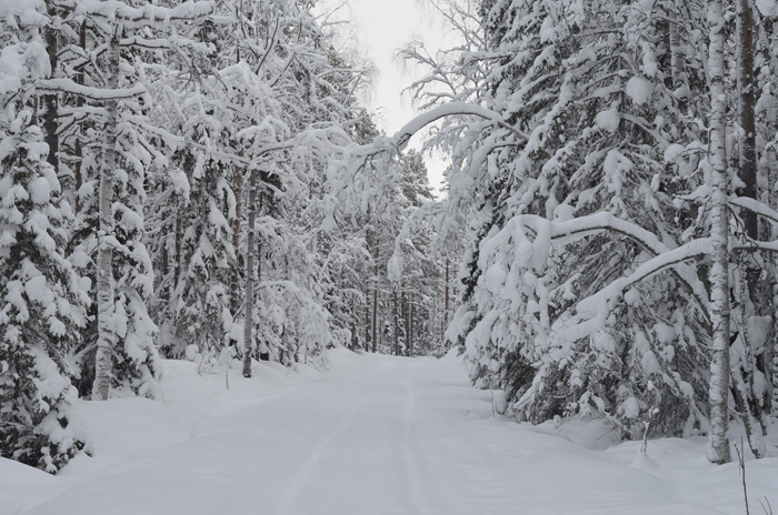 skidtur i vinterlandskap