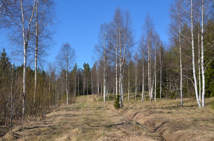 skogsstigar