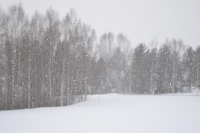 Snöfall äng