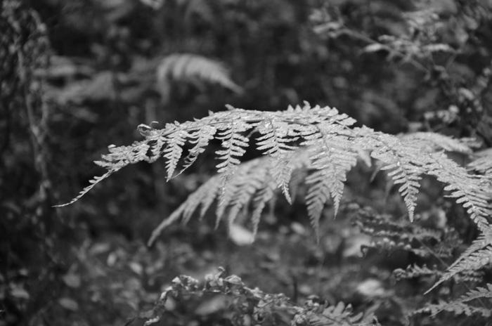 svart vitt foto höst