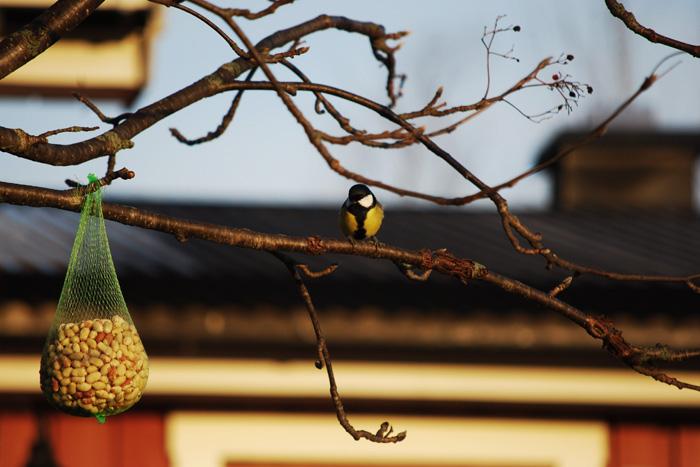 fågelbilder