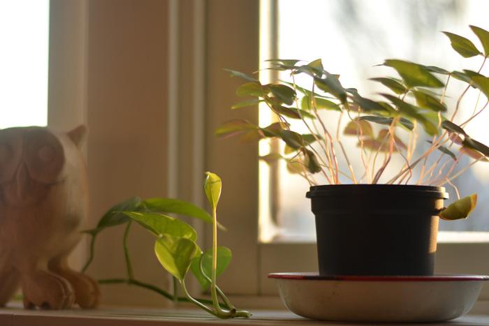krukväxter i fönster