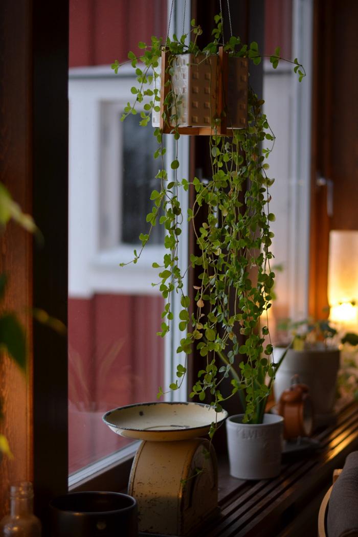 krukväxter vardagsrum
