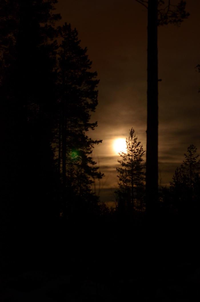 månen i skogen