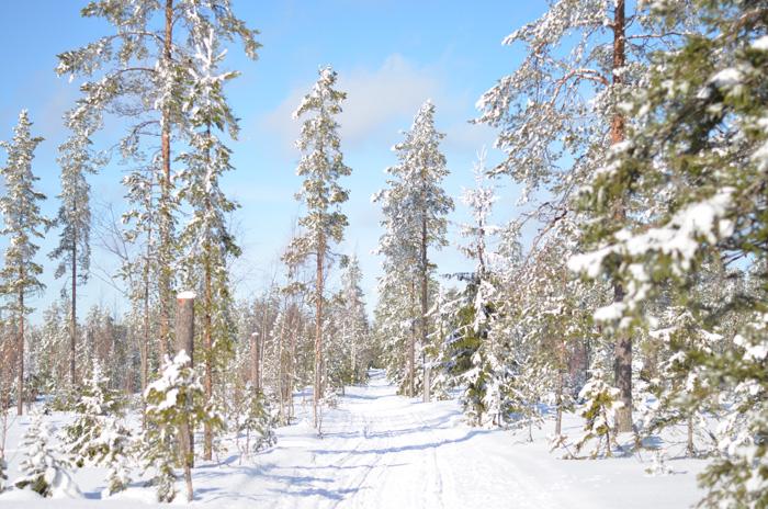 solig skog
