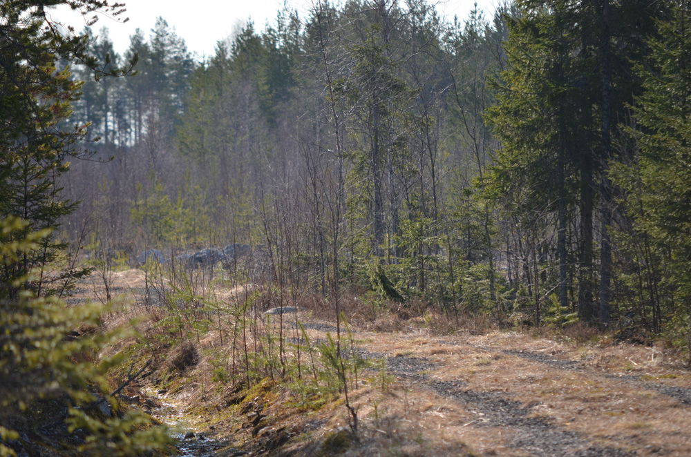 skogsväg