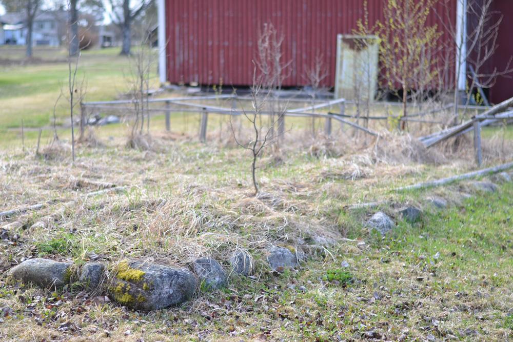 gammal trädgård
