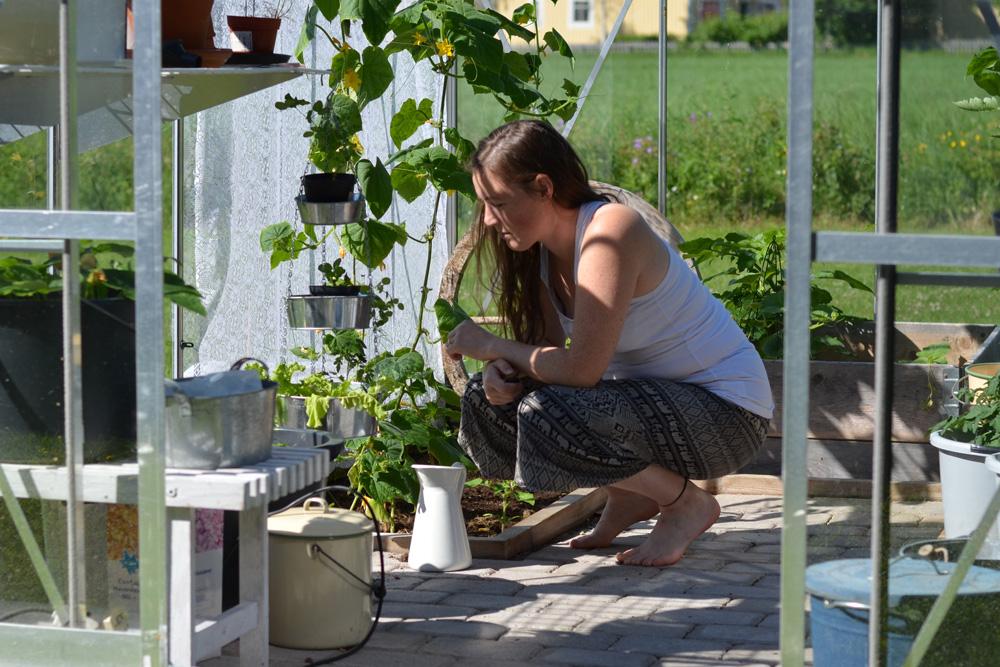 morgon i växthuset