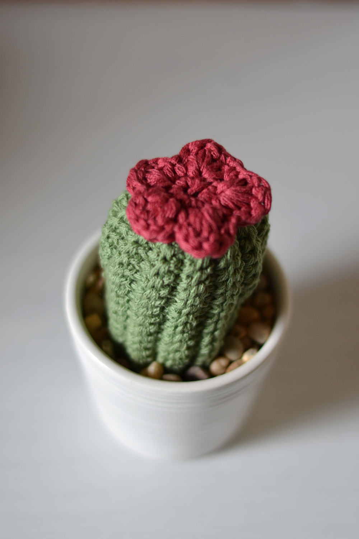 virkad kaktus