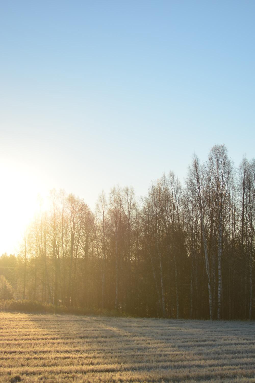frostmorgonen