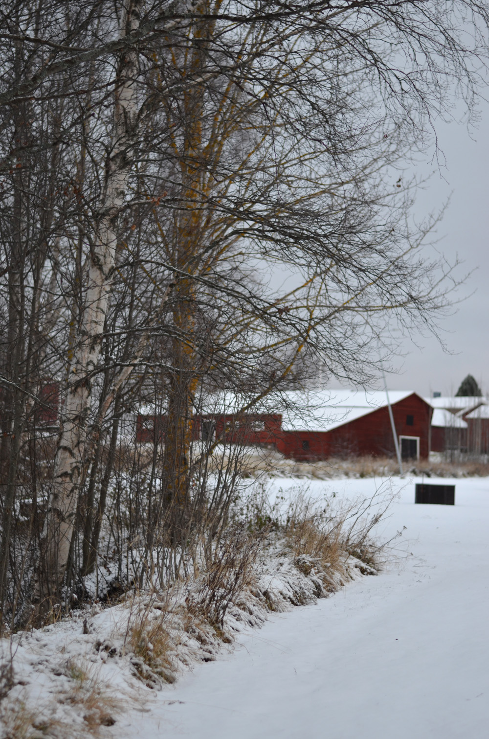 vintern-kommer