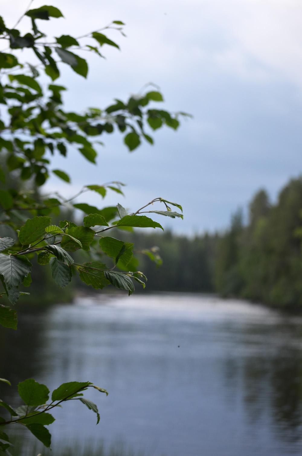 skogslängt