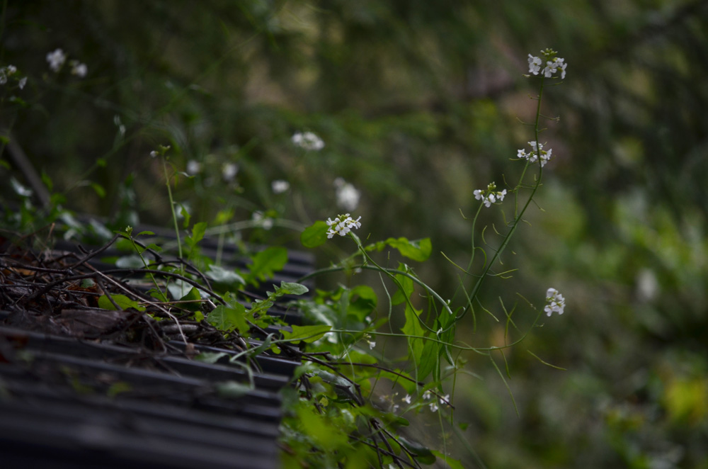 blomma på tak