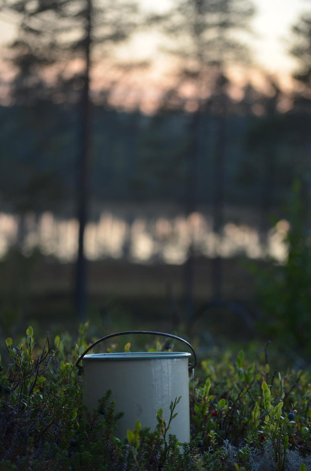 blåbärshink