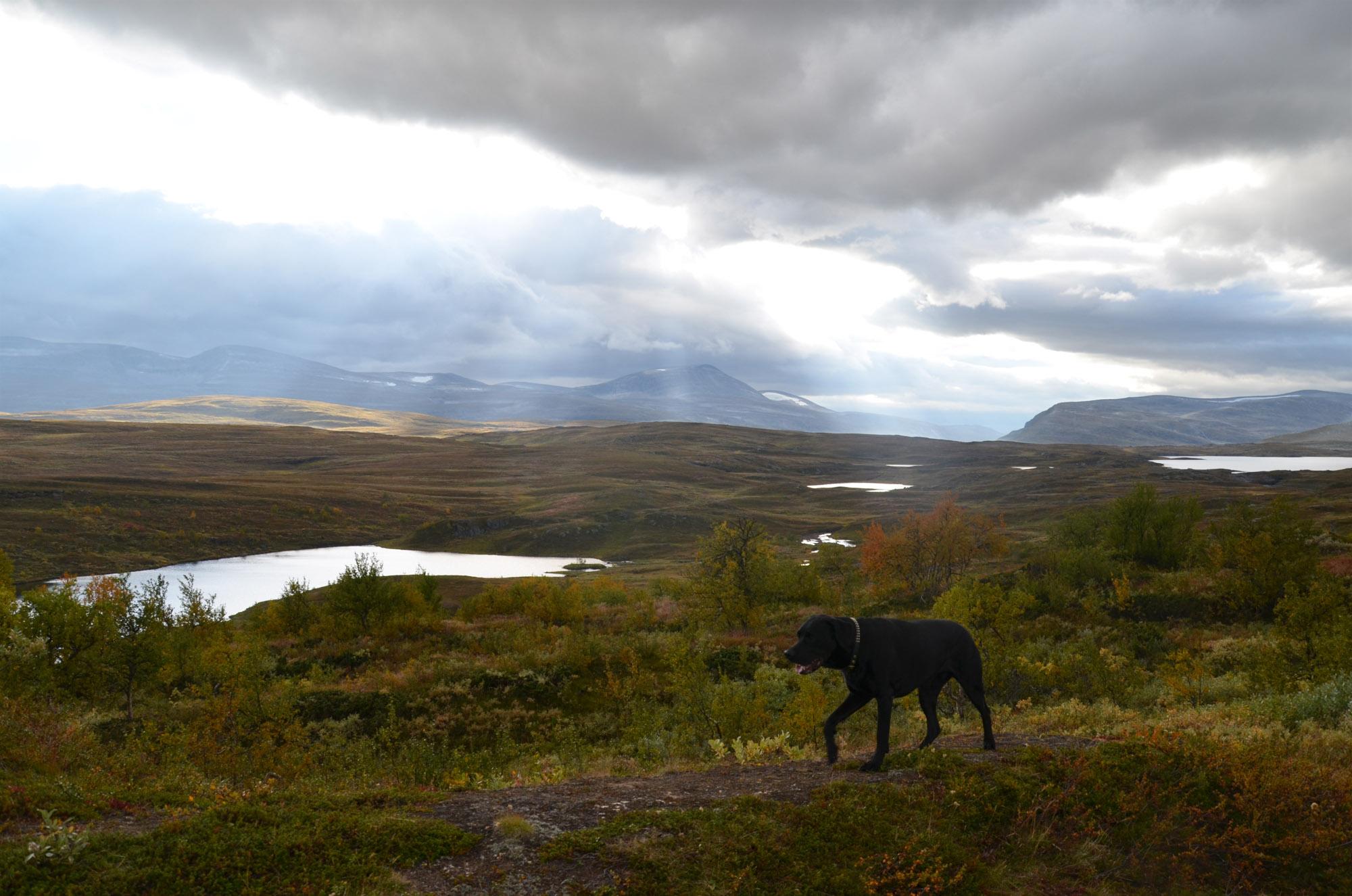 Fjällvandring hund