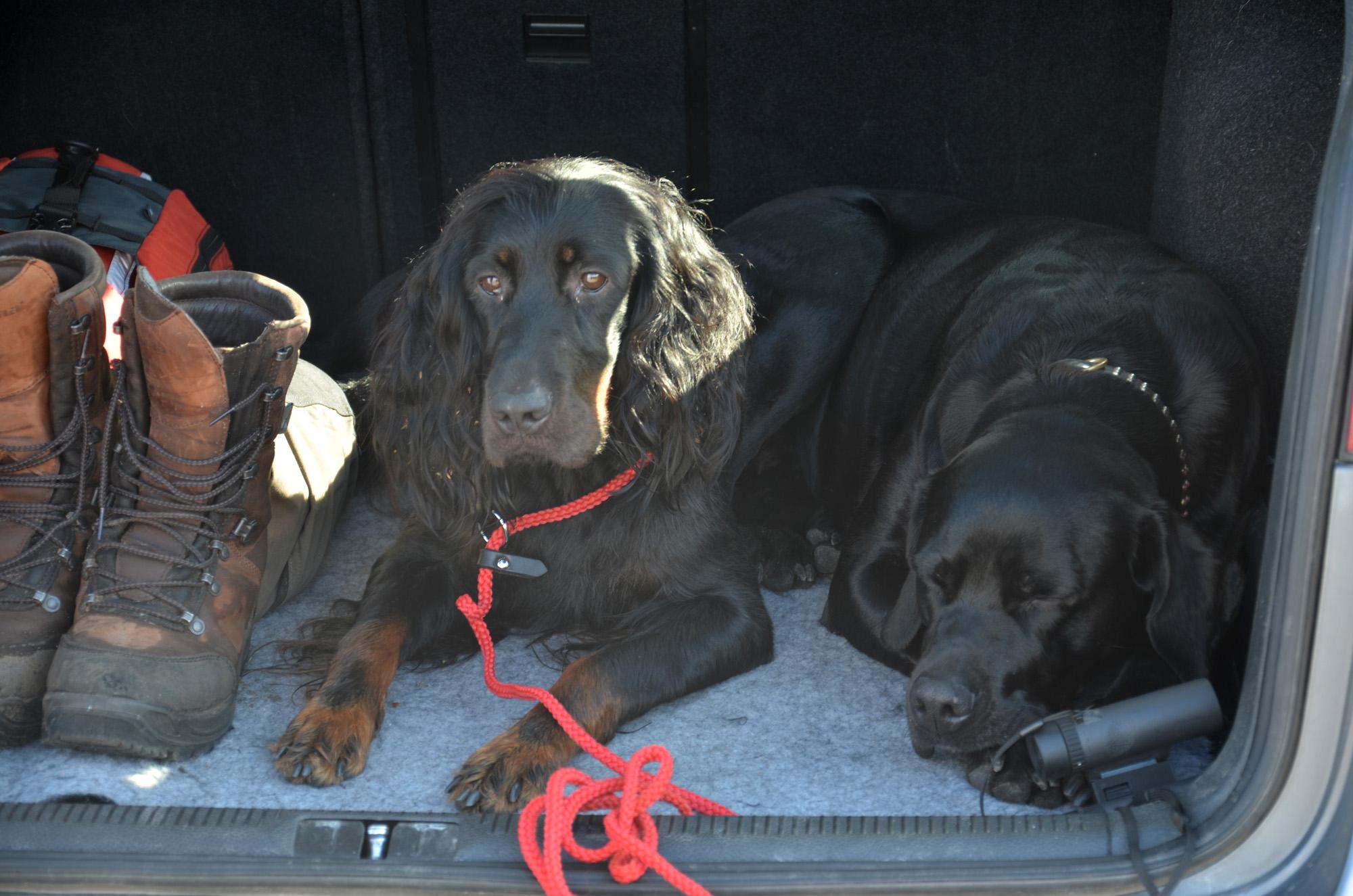 Fjällvandring hundar