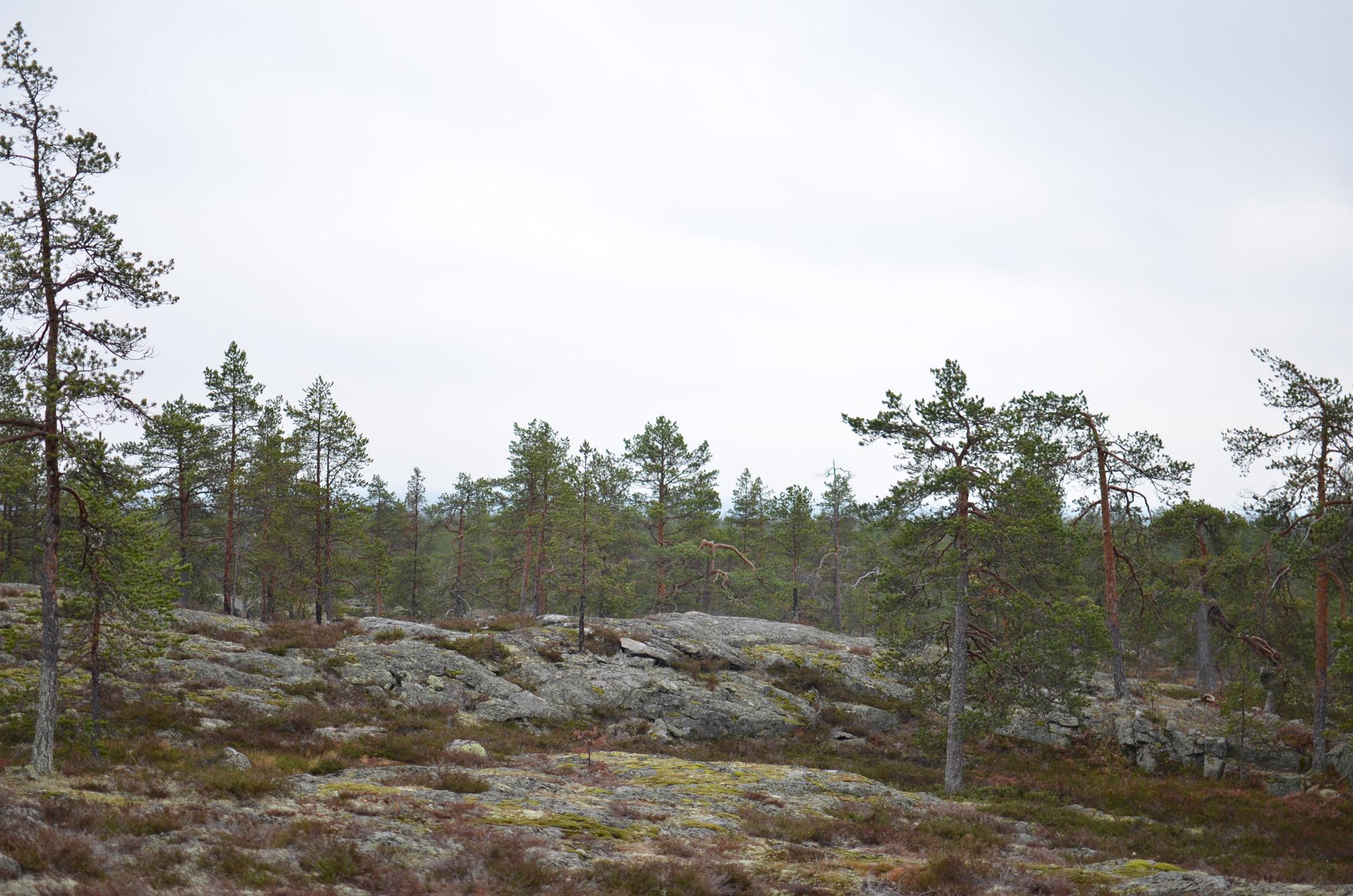 Högberget