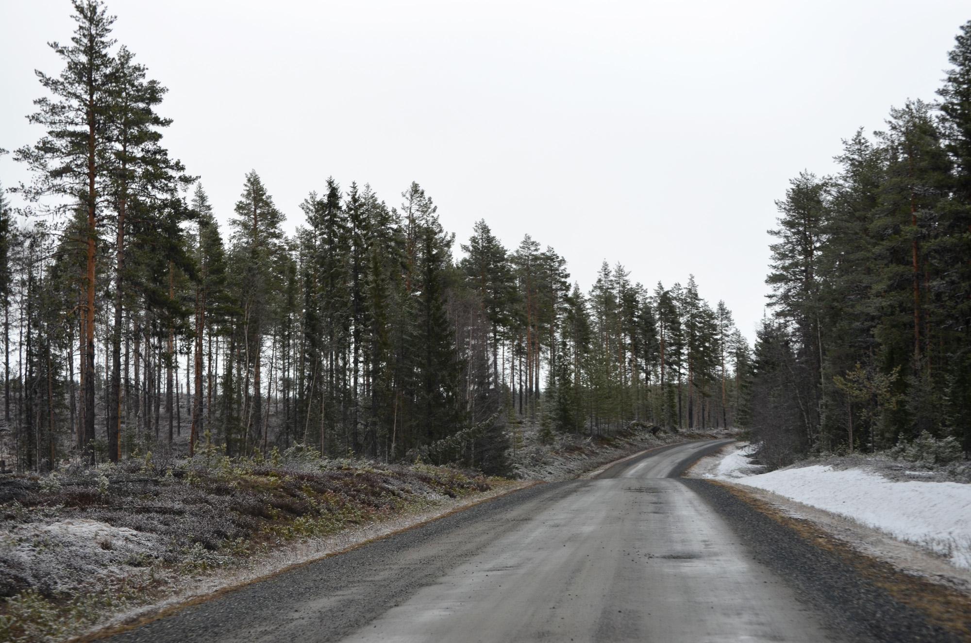 Skogsbilväg