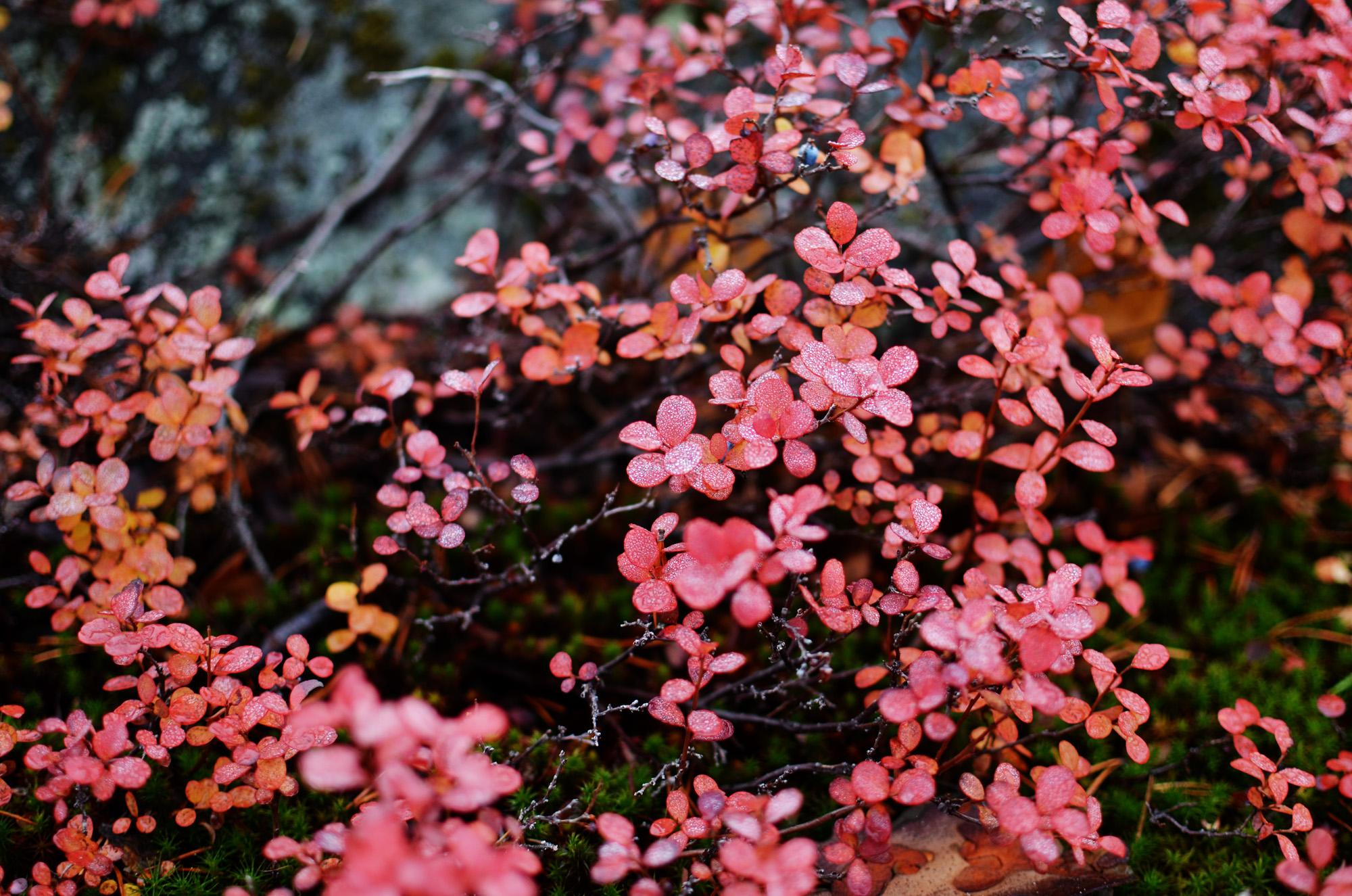 Odon om hösten