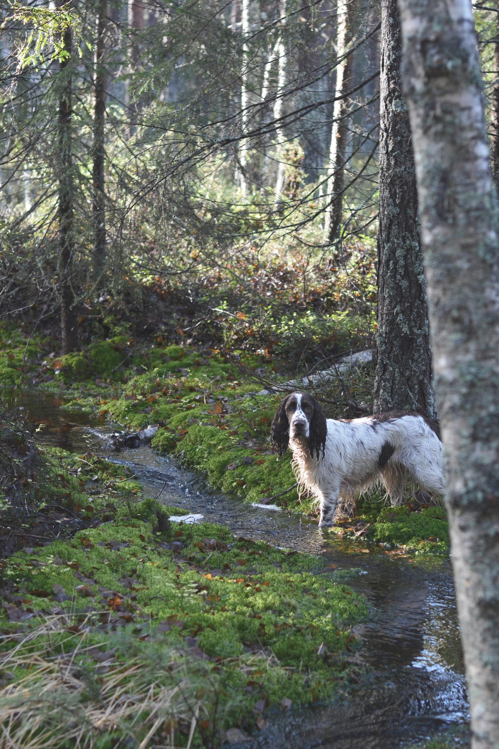Hunden som älskar att bada